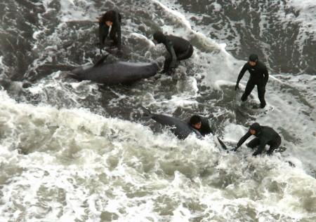 トヨタ・リコール問題・シーシェパードの調査捕鯨妨害・クロマグロ禁漁騒ぎで見えてきた世界の構造変化