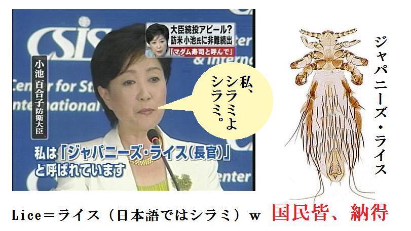 Japanese lice とはなんでしょうか?