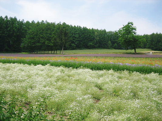 2010年5月4日(火、みどりの日)、北海道帯広で講演会を開催します。