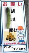 胡瓜の産んだキセノンだったらしい。まあ、なんでもいいや。