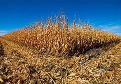 干ばつによる食糧危機