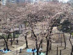明日夕方、3月29日はRK独立党東京池袋「お花見」大会です。