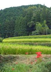 安心安全食材:九州の美味しいお米のご紹介です。