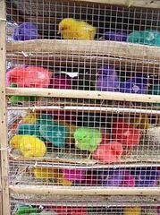 インドの皆さん、ヒヨコを染色して中国に輸出するのはやめてください。