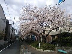今度の日曜日、4月6日12:00〜は、RK独立党お花見宴会です。