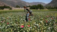 アフガニスタンのヘロイン生産、絶好調です。