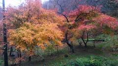 11月7−8日 霧積温泉忘年旅行、順調に終わろうとしています。